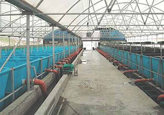 World 39 s biggest fish farm launched in abu dhabi for Fish farming business