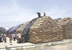 Stopping foodgrain buying by FCI will be harmful for farmers: Punjab