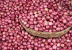 Government okays bids for 1k tonnes of onion import, to buy more