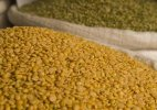 Govt to import additional 5,000 tons of tur dal to check prices