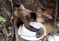 Do the monkey way!