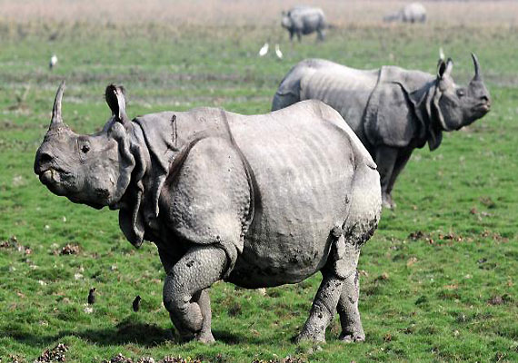 Gang of 18 rhino poachers arrested in Assam