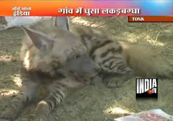 Rajasthan Villagers Beat Hyena To Death