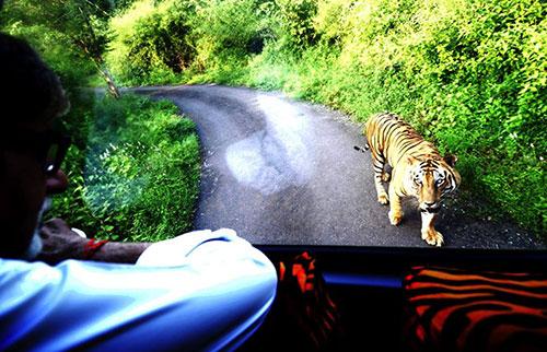 amitabh bachchan tiger