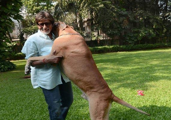 Big Pet Big B's Pet Dog Shanouk Dies