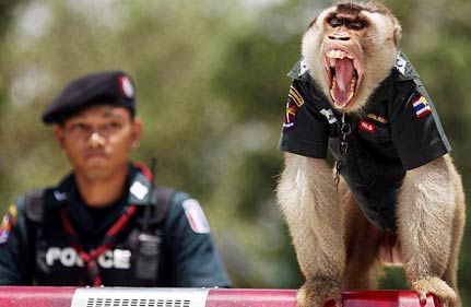 Thai Monkey Wears A Police Uniform