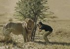 Crazy or committed&#63 What will you call these wildlife photographers&#63