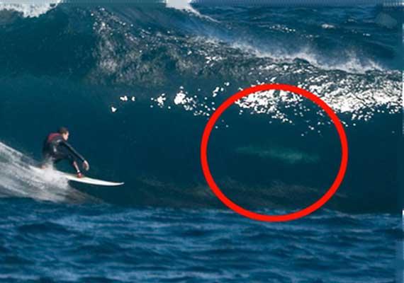 Australia to kill sharks threatening beachgoers