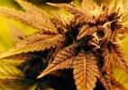 Jamaica passes act decriminalizing small amounts of pot