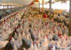 Bird flu outbreak confirmed in 11 Nigerian states