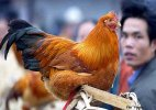 H7N9 bird flu cases in China province rise to 25
