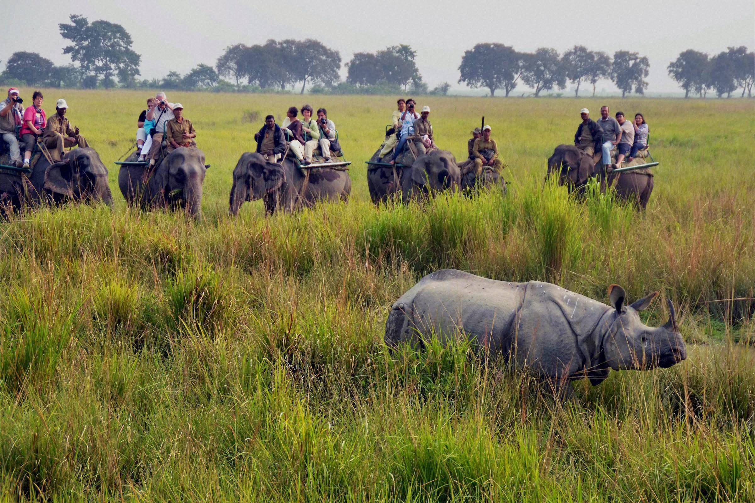 Image result for kaziranga