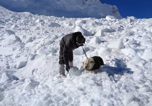 Siachen rescue canines