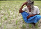 Drought-hit Maharashtra sees 40% increase in farmer suicides