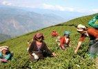 17 per cent tea garden workers in Assam have tuberculosis