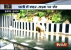Heavy rains take a toll of five Asiatic lions in Gujarat