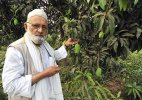 Famous mango cultivator Haji Kalimullah comes out with a new 'Modi mango' variety