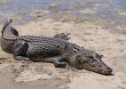 Odisha woman wins fight against crocodile just with a cooking bowl and stick