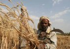 Government to sell on priority 27 million tonnes of wheat procured this year