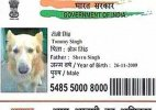 Now a 'dog' gets Aadhar card