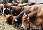 Samajwadi Party MP Munavvar Saleem demands nationwide ban on cow slaughter