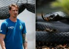 Dale Steyn close call with deadly Black Mamba